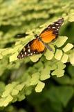 Vlinder op installatie royalty-vrije stock afbeelding