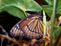 Vlinder op installatie Stock Foto