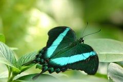 Vlinder op installatie Stock Foto's