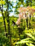 Vlinder op kale bok Royalty-vrije Stock Fotografie
