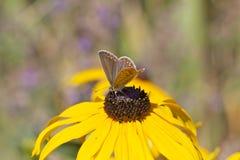 Vlinder op kleurrijke bloem Royalty-vrije Stock Afbeeldingen