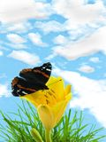 Vlinder op lelie Royalty-vrije Stock Foto's