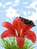 Vlinder op lelie Stock Foto's