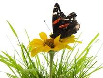 Vlinder op madeliefje Stock Afbeelding