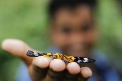 Vlinder op menselijke hand rust op hand royalty-vrije stock fotografie