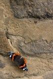 Vlinder op muur Stock Afbeeldingen