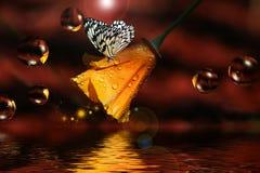 Vlinder op Papaver Stock Foto's