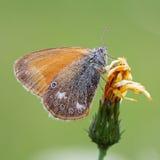 Vlinder op planeet Stock Foto