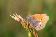 Vlinder op planeet Stock Foto's