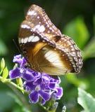 Vlinder op Purpere Bloem royalty-vrije stock afbeeldingen