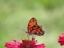 Vlinder op rode bloem royalty-vrije stock afbeelding
