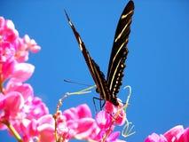 Vlinder op roze bloem Stock Foto