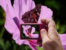 Vlinder op roze bloembeeldzoeker in camera royalty-vrije stock foto