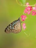 Vlinder op Roze Bloemen Royalty-vrije Stock Afbeelding