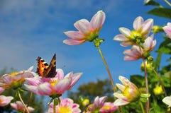 Vlinder op Roze Bloemen Stock Afbeelding