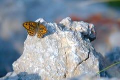 Vlinder op steen Royalty-vrije Stock Afbeelding