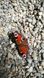 Vlinder op stenen stock afbeeldingen