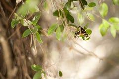 Vlinder op vers groen blad Royalty-vrije Stock Afbeeldingen