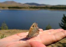 Vlinder op vinger Stock Afbeelding