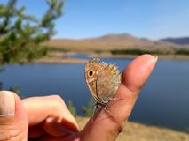 Vlinder op vinger Royalty-vrije Stock Foto's