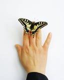 Vlinder op vinger Royalty-vrije Stock Afbeelding