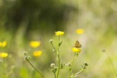 Vlinder op wildflower Stock Foto