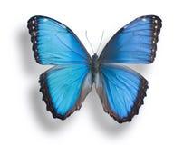 Vlinder op wit Royalty-vrije Stock Foto