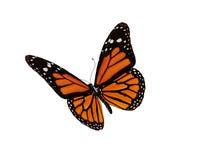 Vlinder op wit Stock Foto