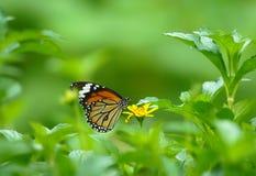Vlinder over een bloem Stock Fotografie