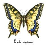 Vlinder Papillo Machaon. De imitatie van de waterverf. Stock Foto's
