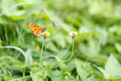 Vlinder in park Royalty-vrije Stock Foto