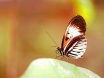 Vlinder, pianosleutel op groen blad in vogelhuis Royalty-vrije Stock Afbeelding