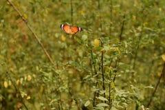 Vlinder prachtige schepselen van de aard royalty-vrije stock afbeeldingen