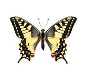 Vlinder. Swallowtail stock foto