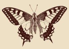 Vlinder Swallowtail (Papilio machaon) Royalty-vrije Stock Afbeeldingen