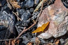 Vlinder ter plaatse royalty-vrije stock afbeeldingen