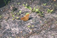 vlinder ter plaatse - uitstekend pastelkleureffect stock afbeeldingen