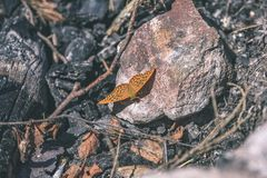 vlinder ter plaatse - uitstekend pastelkleureffect stock afbeelding