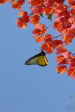 Vlinder in tropische tuin Stock Afbeeldingen