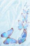 Vlinder voor het bevriezen van glas Stock Afbeeldingen