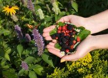 Vlinder, wilde aardbeien en braambessen Stock Afbeeldingen