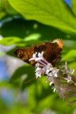 Vlinder Wilde bloem Royalty-vrije Stock Afbeelding