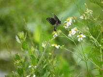 Vlinder & Wildflowers Royalty-vrije Stock Foto's