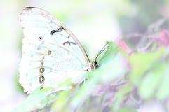 Vlinder, zwart-wit wit-op-wit Stock Afbeelding