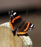 Vlinderadmiraalvlinder op omheiningspost Royalty-vrije Stock Afbeeldingen