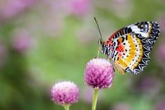 Vlinderbloemen Stock Afbeelding