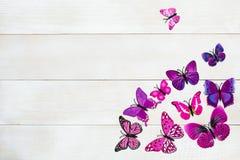 Vlinderdecoratie Royalty-vrije Stock Afbeeldingen
