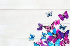 Vlinderdecoratie Royalty-vrije Stock Afbeelding