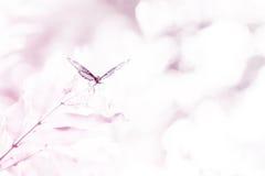 Vlinderdroom Stock Foto's