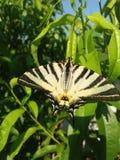 Vlindereffect stock afbeeldingen
